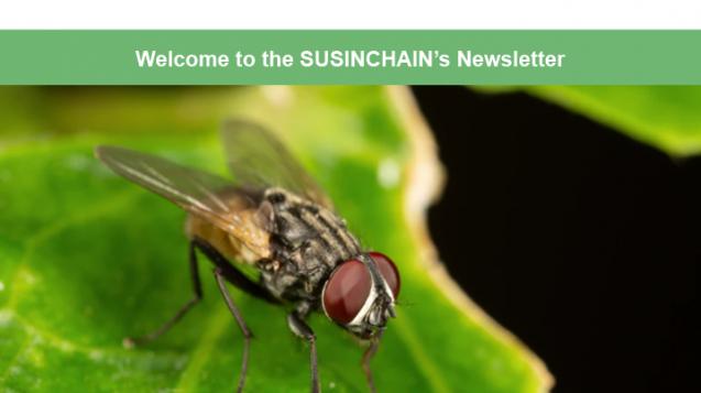 susinchain-newsletter3